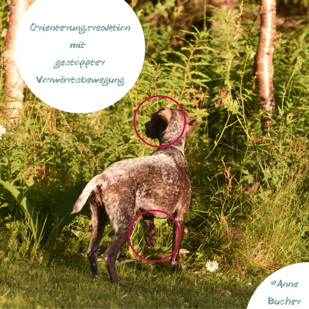 Körpersprache des Hundes:Nicht alles ist sichtbar