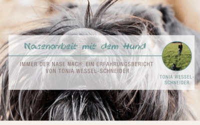 Nasenarbeit mit dem Hund: Immer der Nase nach