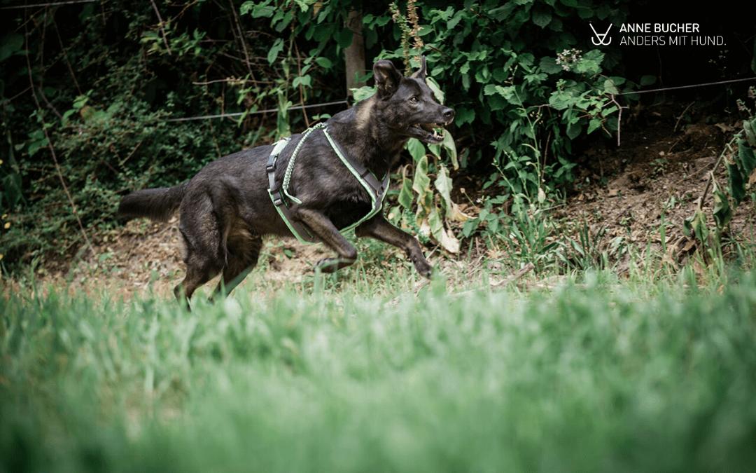 Sieben Dinge die du tun kannst, wenn freilaufende Hunde in euch reindonnern